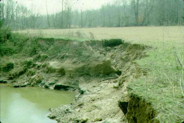 Example of streambank caving in the project area